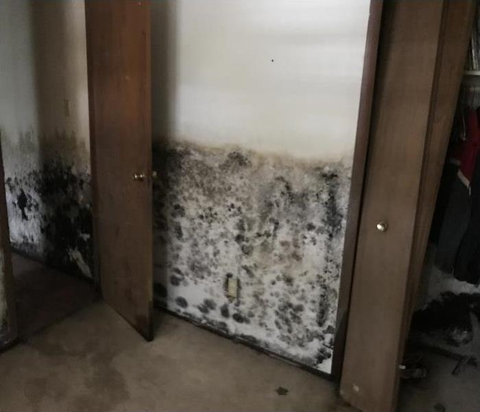 Mold Remediation Why do I Have Mold in My Home?