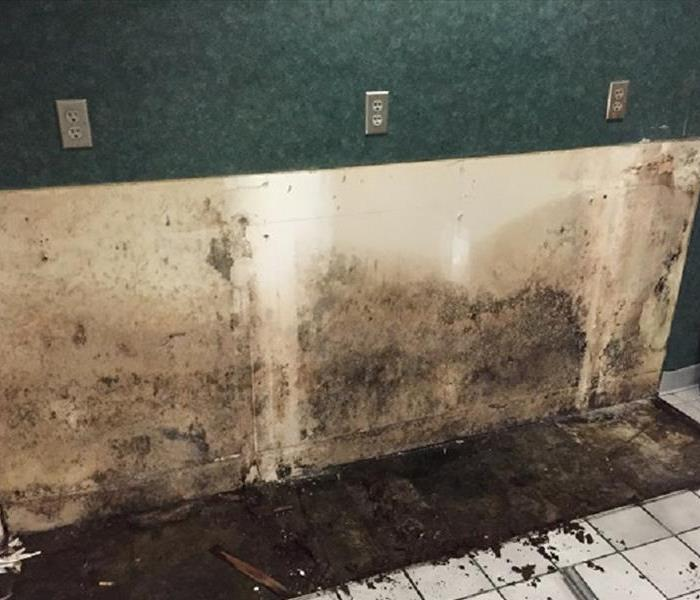 Mold Remediation Does Your Westerville Home Have A Mold Problem?